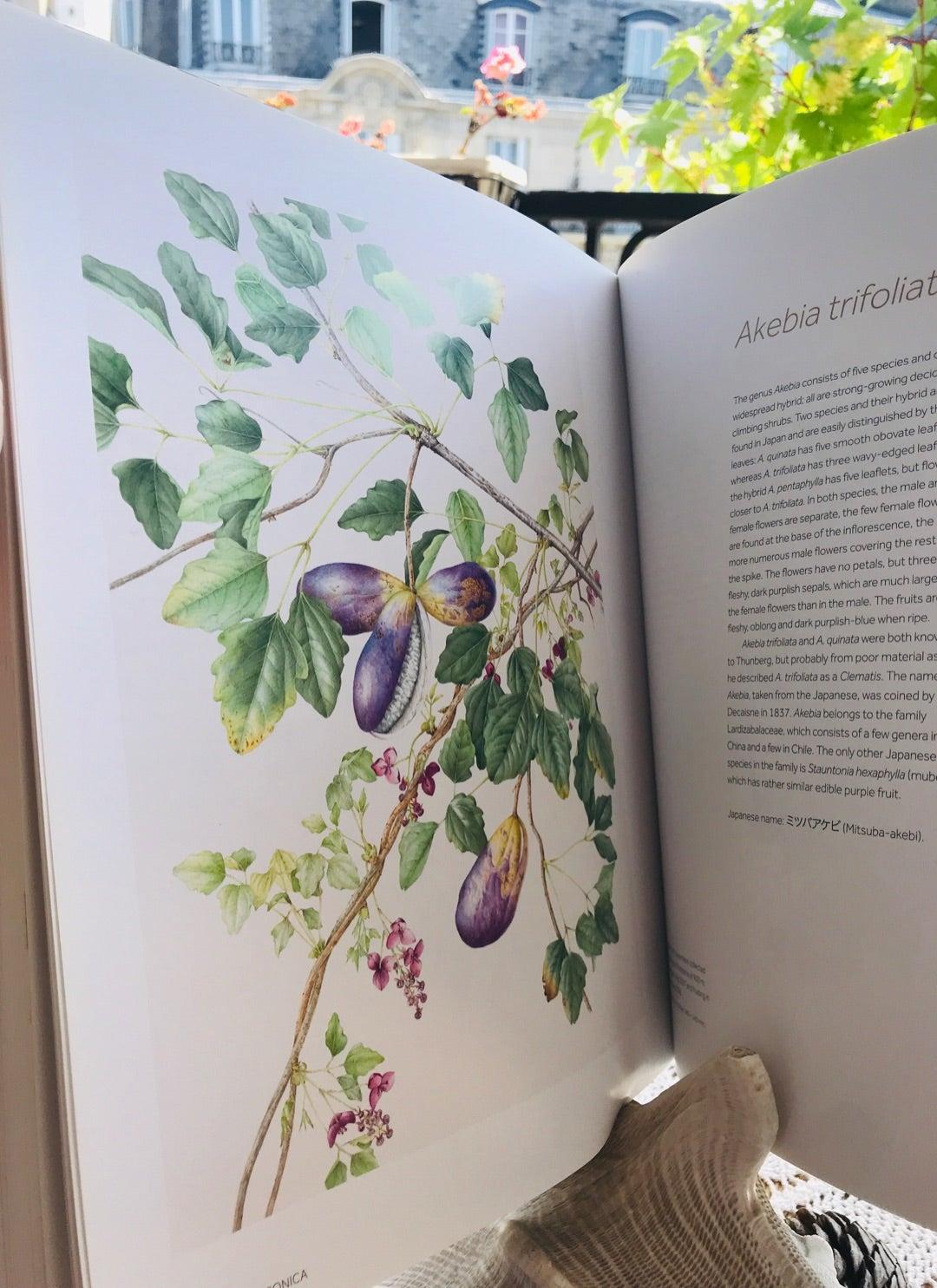 イチヂク、綺麗。昔の人の植物画がわたしは好き。このKEW王立植物園の画集には、大...の記事より