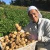 素人の野菜農家は島で食べていけるのか?最終回 第十七話の画像