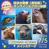 【高知県桂浜水族館 オンラインえさやり体験】7/5オンライン体験フェスの画像