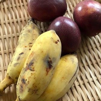 種ありバナナ!?