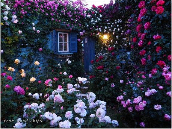 バラの庭 ライトアップ