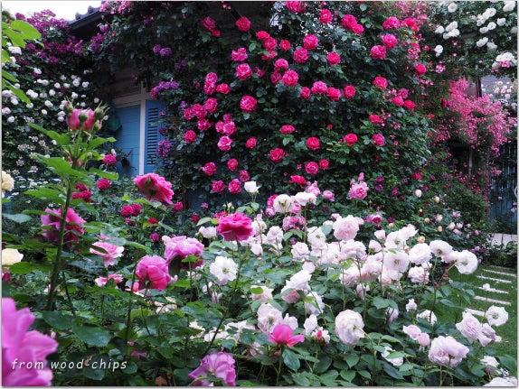 バラの庭 春の風景