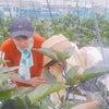援農ボランティアさんの画像