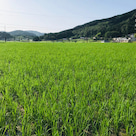 お米作り始めましたの記事より
