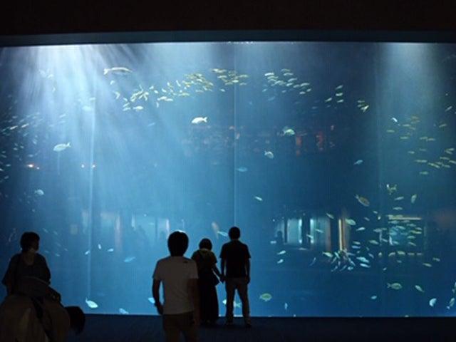 四国 最大 水族館 四国最大級の四国水族館が20年6月OPEN おすすめ周辺スポットも