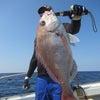 6月29日の釣果の画像