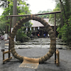 茅の輪くぐりの必勝法の画像