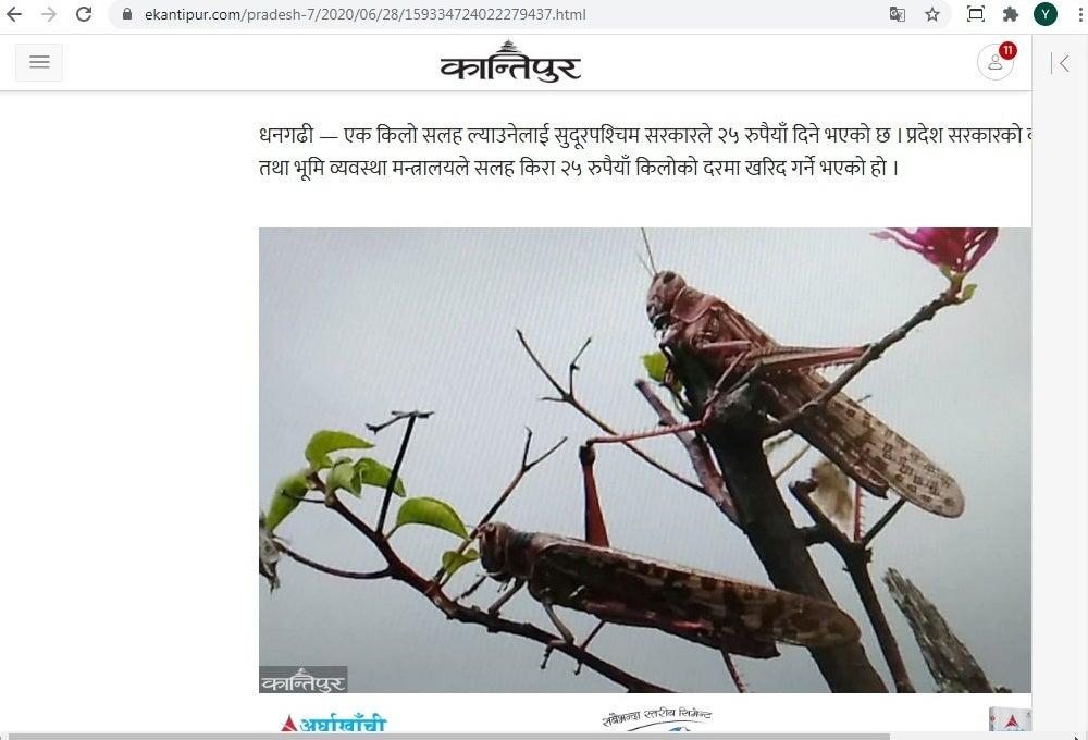 バッタ ネパール ネパールにまで進出したサバクトビバッタの大群、同国政府は殺虫剤の大量使用に代えて、パキスタンと同様、「捕獲・飼料化」作戦を展開へ。したたかなアジアの知恵(RIEF)