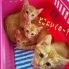 ドキドキ子猫4匹の通院の画像