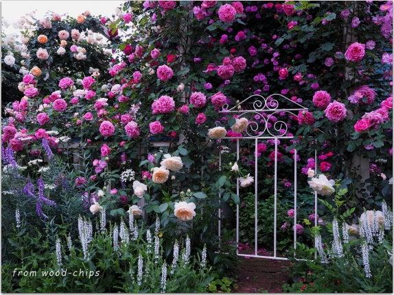 つるバラの庭づくり