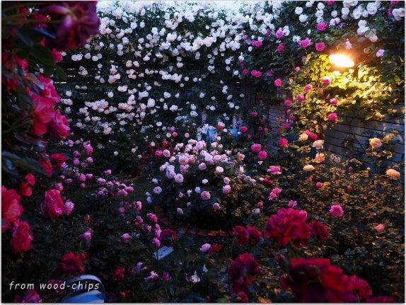 バラの庭 ライトニング