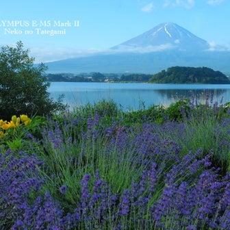 ラベンダー咲く富士山@河口湖・大石公園