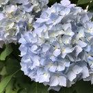 ◆7月の店休日と最終入店についてのお知らせ◆の記事より