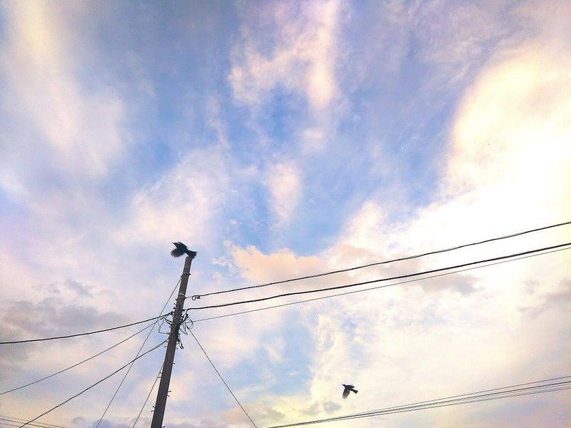 青空にはばたく2羽の鳥