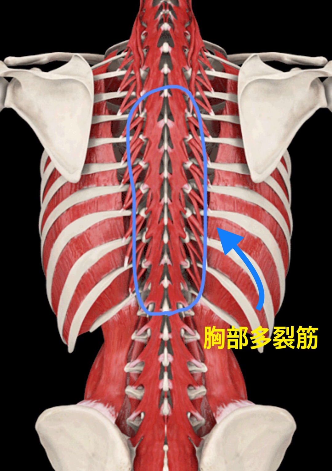 胃 が キリキリ 下痢 胃痛と下痢が同時に起こる場合 下痢の改善相談室