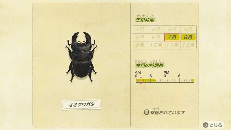 種類 あつ森 カブトムシ