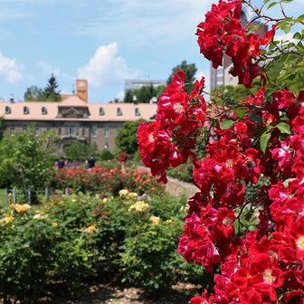 大通公園西12丁目薔薇の花園