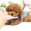5月5日生まれの男の子♡  ティーカップ予想♡