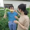 農labo 援農ボランティアの画像