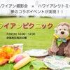 7/22㈬ハワイアンピクニック♪撮影会&リトミック♪西宮ハワイアンリトミックPlumeriaの画像