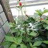 ガーデンJYUKOUの画像