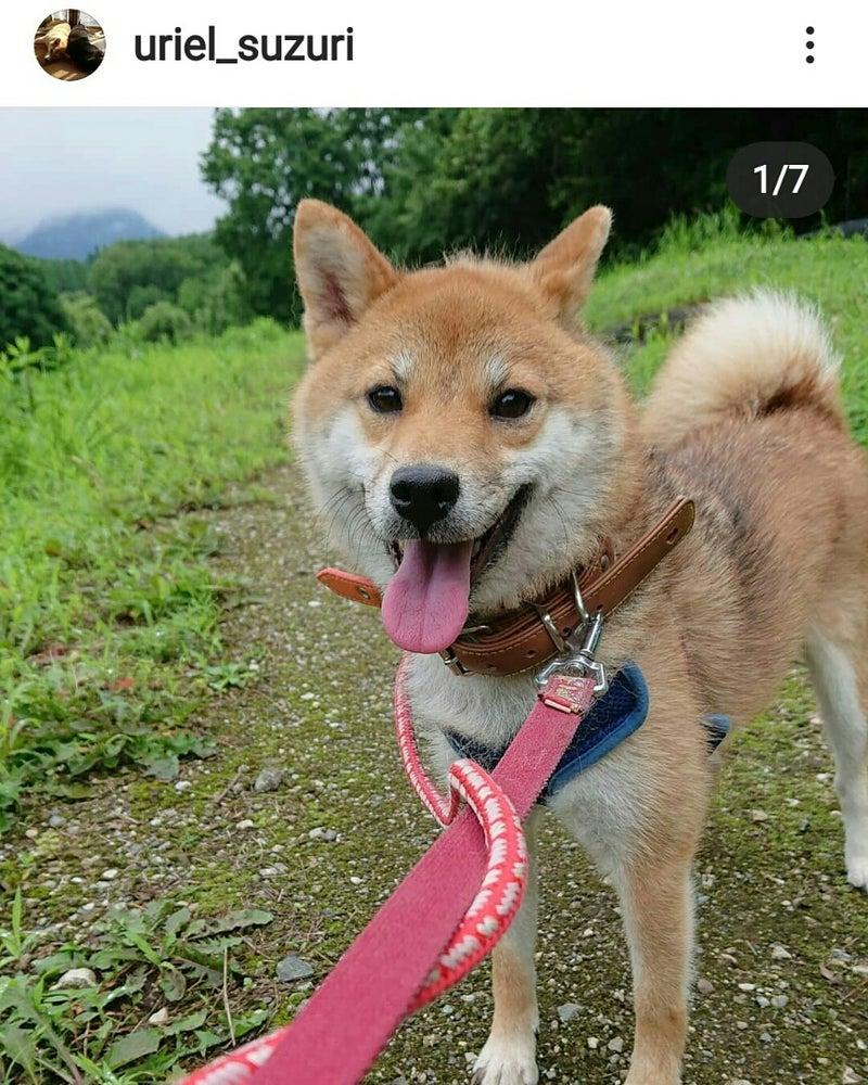 譲り 埼玉 無料 子犬 ます