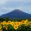夏の富士山2020の画像