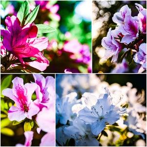 花の微笑みに癒やされて。の画像