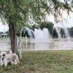 噴水のある公園♪