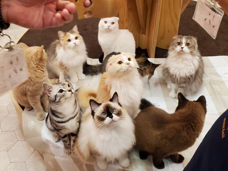猫 イオン 大 カフェ 日