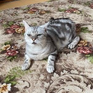 雨の日の猫隊7月13日の画像