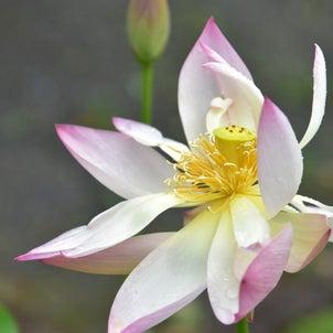 おまたせしました ❤一乗寺 季節の便り❤の画像
