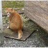 猫ニャン♪の画像