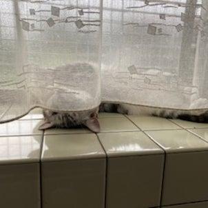 猫隊とのゆる~い一日の画像