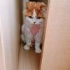 猫ののマカロン闘病記Part2の画像
