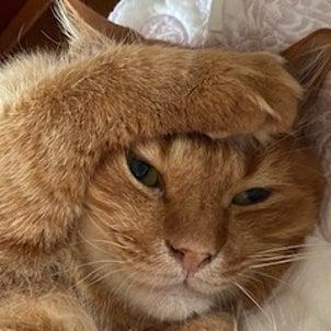 我が家の猫隊7月15日の画像