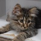 子猫フェア開催!の記事より