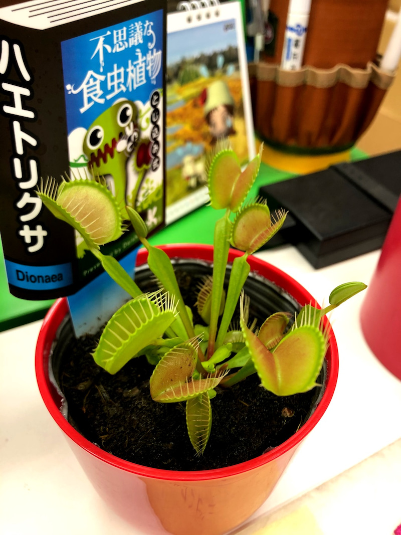 コバエ 植物 食 虫