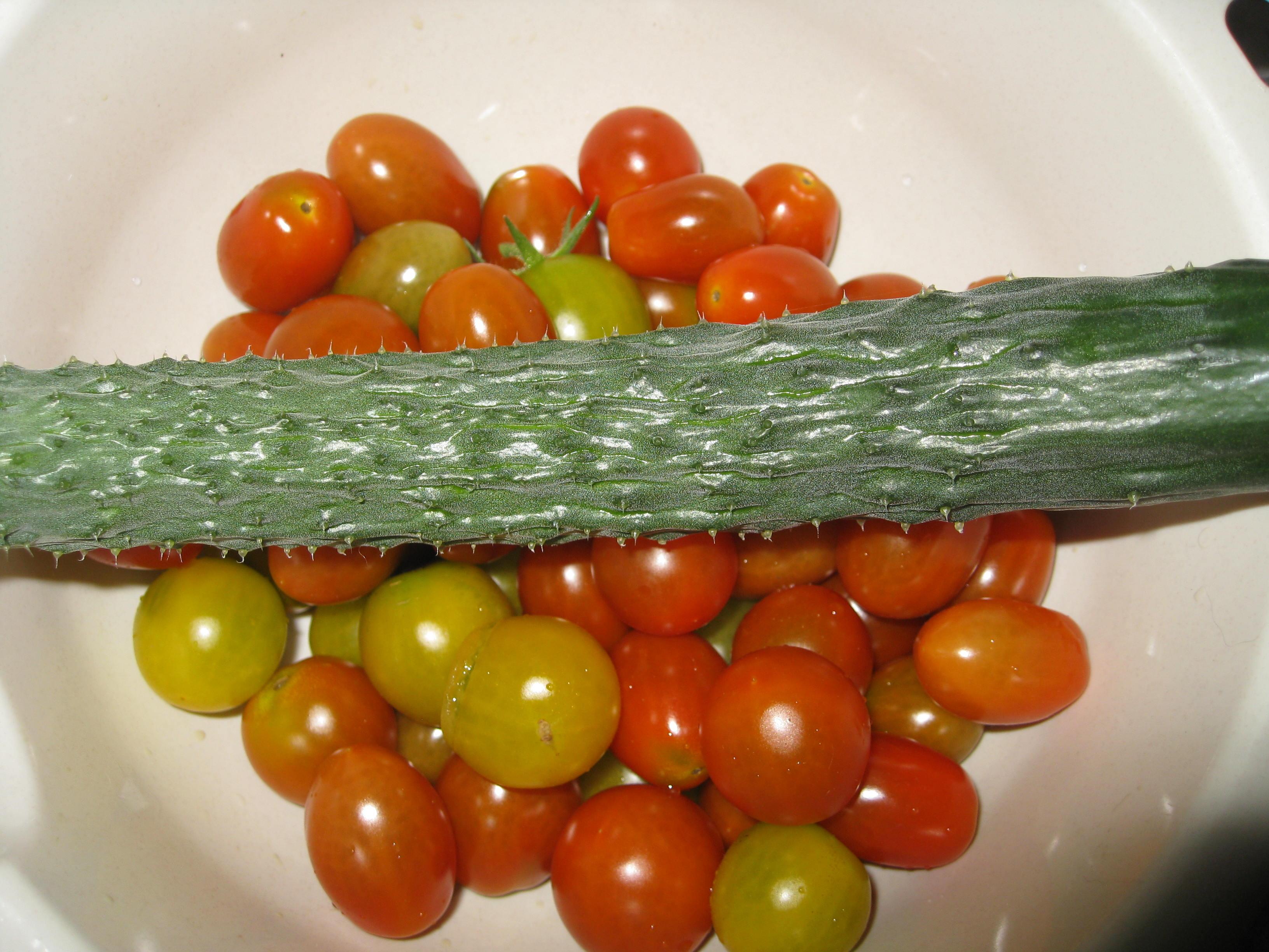 カミキリムシは5匹目  プランターミニトマト1003個 一本当たり167個