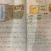 たかが絵日記、されど絵日記の画像
