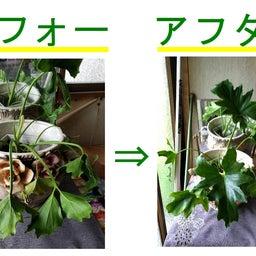 画像 ライフウェーブ パッチの威力と効果 植物は素直! の記事より 8つ目
