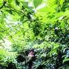 8月・9月の予約状況   渥美半島☆自然感察ガイドの画像