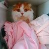猫のマカロン闘病記Part3の画像