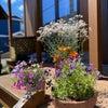 暮らしにちょっと色を添える寄せ植えのススメ~我が家の庭づくり③~の画像