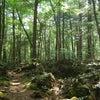 世界で一番美しい森の画像