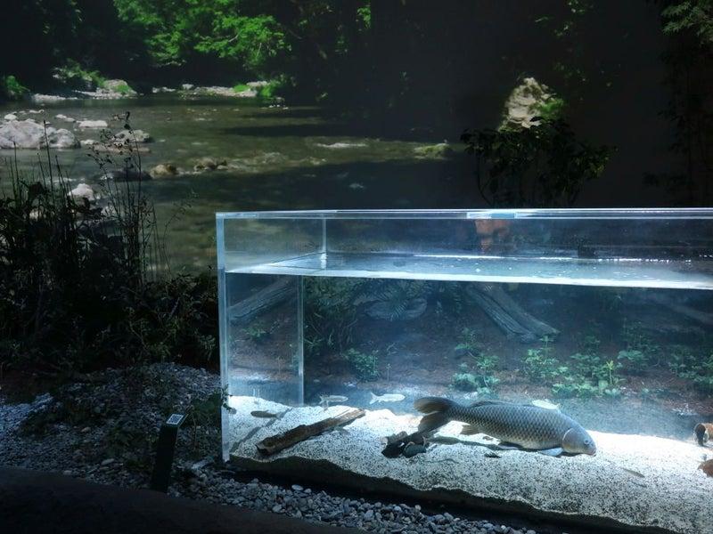カワスイ 川崎水族館 昼と夜 | ルアーマンのブログ