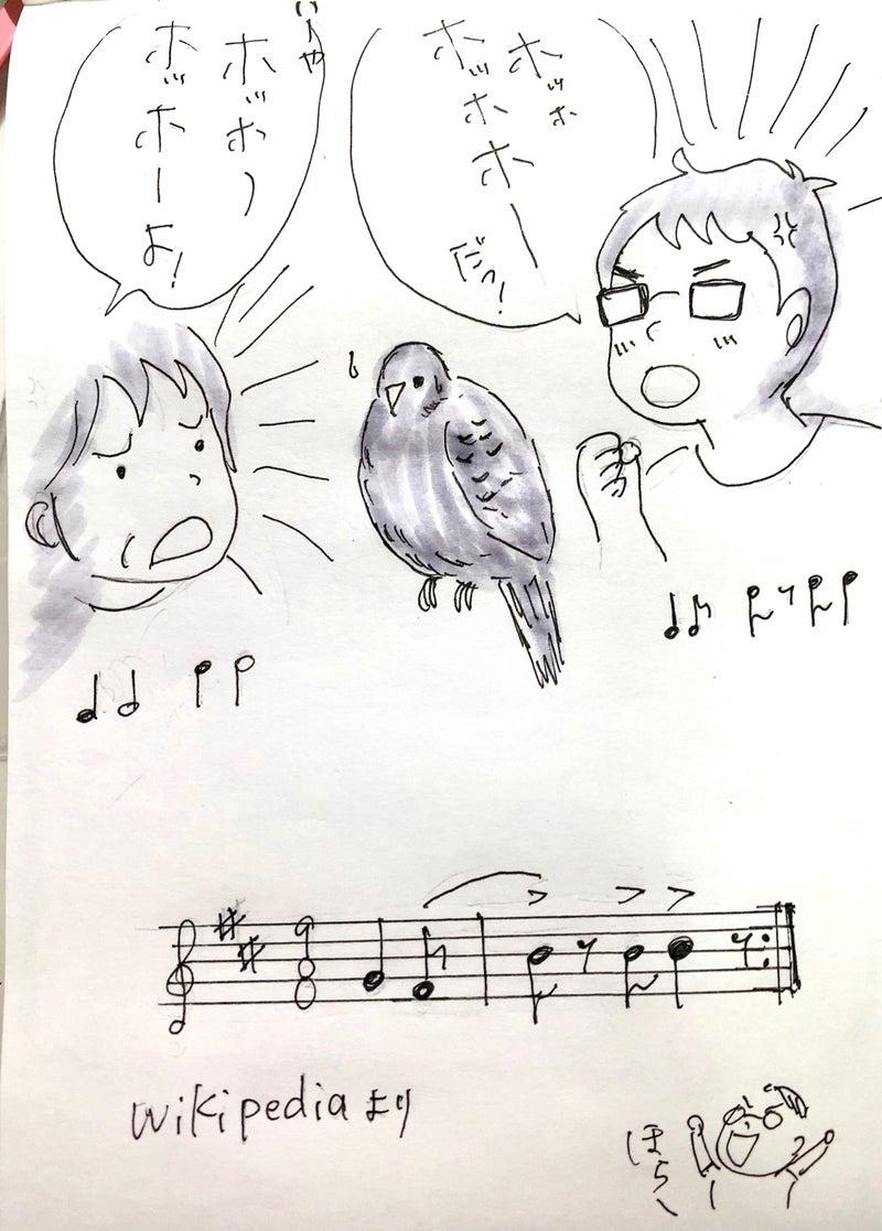 鳴き声 ハト