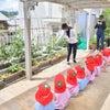 土曜豆種植え(最年少・いちご組)の画像