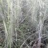 10年間お米を売らなかったのは、、、の画像