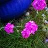 3月から色々ー庭の花の画像